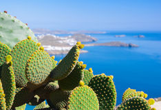 Beautiful Green Cactus On A Background Of Blue Sea
