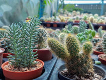 Beautiful green cactus plant Stock Photo