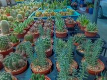 Beautiful green cactus plant Stock Photography