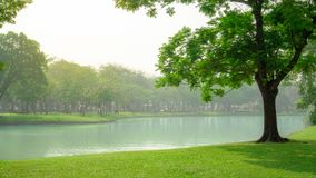 Beautiful green carpet grass and big tree on smooth lawn yard beside a lake, plenty of trees on background under white cloudy sky royalty free stock images
