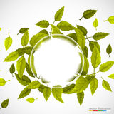 Beautiful green circle of leaves. Royalty Free Stock Photo