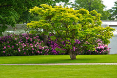 Beautiful green city park Royalty Free Stock Images