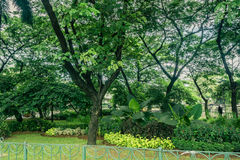 Beautiful green city park with various kind of plant and flower surrounding by green fence photo taken in Jakarta Royalty Free Stock Photography