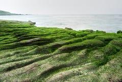 Beautiful green coast Stock Photos