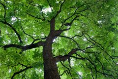 Beautiful green colored tree Royalty Free Stock Photography