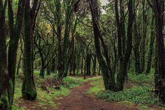 Beautiful green colored woodland. Sintra, Portugal royalty free stock photos