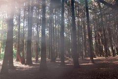 Beautiful green colored woodland. Sintra, Portugal, Fog stock photos