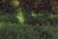 Beautiful green colored woodland. Sintra, Portugal royalty free stock photography