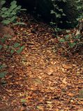Beautiful brown colored woodland. Beautiful green colored woodland, Sintra, Portugal stock image