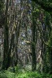 Beautiful green colored woodland. Sintra, Portugal stock image