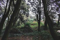 Beautiful green colored woodland. In Sintra, Portugal stock photo