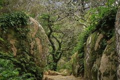 Beautiful green colored woodland. Sintra, Portugal, Pena park stock photos