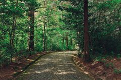 Beautiful green colored woodland. Sintra, Portugal, Pena park royalty free stock photo
