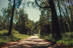 Beautiful green colored woodland. Sintra, Portugal, Peninha stock photo