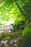 Beautiful green countryside. Waterfall on a river with big rocks and deciduous forest. Green landscape. Beautiful green countryside. Waterfall on a river with Royalty Free Stock Photos