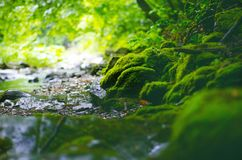 Beautiful green countryside. Waterfall on a river with big rocks and deciduous forest. Green landscape. Beautiful green countryside. Waterfall on a river with Stock Images
