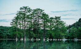 Beautiful green cypresses Royalty Free Stock Photography