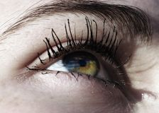Beautiful green eye. Woman green eye beautiful view Stock Photos