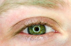 Beautiful green eye macro. Beautiful green eye looking straight macro Stock Image
