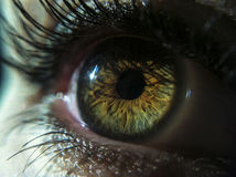 Beautiful green eye macro. Beautiful green eye looking straight macro stock photos