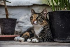Beautiful green-eyed cat in Green House of Leo Tolstoy in Yasnaya Polyana royalty free stock image