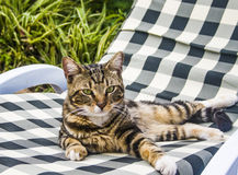 A beautiful green-eyed cat Royalty Free Stock Photography