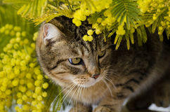 Beautiful green eyed cat playing in backyard Royalty Free Stock Images