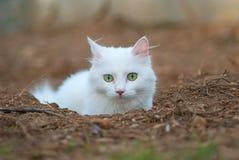 Beautiful green eyed white cat portrait. Stock Image