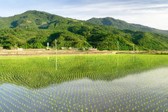 Beautiful green farm royalty free stock photography