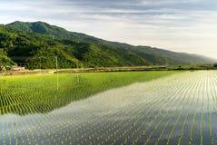 Beautiful green farm stock photo