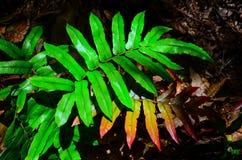 Beautiful green fern leaf against sunlight in a rainforest. A Beautiful green fern leaf against sunlight in a rainforest stock image