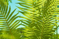 Beautiful green fern shot using natural light with blue sky. stock photo