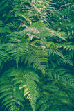 Beautiful green fern and sunlight Stock Images