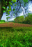 Beautiful green field Stock Photo