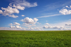 Beautiful green field and cloudy sky. Royalty Free Stock Image