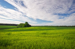 Beautiful green field and cloudy sky. Stock Photos