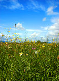 Beautiful green field full of different flowers. Beautiful green meadow full of different colourfull spring flowers under cloudy sky Stock Photos
