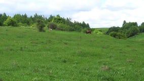 Beautiful green field, long-range shooting. Beautiful green field,long- range shooting stock video footage