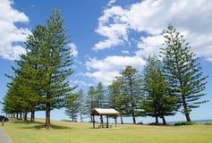 Beautiful green field park with big pine trees near beach side in Kiama, New South Wales, Australia. A Beautiful green field park with big pine trees near beach Stock Image
