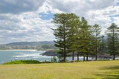 Beautiful green field park with big pine trees near beach side in Kiama, New South Wales, Australia. A Beautiful green field park with big pine trees near beach Stock Images