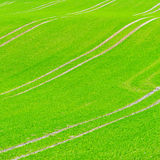 Beautiful green field pattern Stock Image