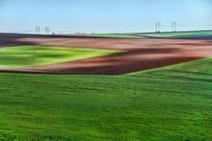 Beautiful green field summer landscape Royalty Free Stock Photos
