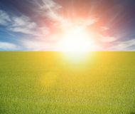 Beautiful green field on a sunrise Stock Photography