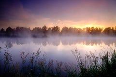 Beautiful green field Stock Photography