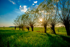 Beautiful green field Stock Photos