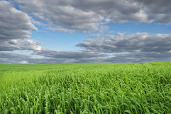 Beautiful Green Field Under Blue Sky Stock Photo
