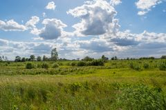 Beautiful green field under the cloudy sky Royalty Free Stock Image