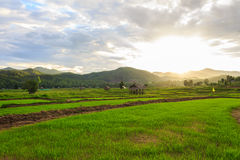Beautiful green fields. Beautiful countryside green fields in Thailand Stock Photos