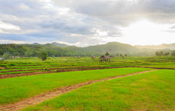 Beautiful green fields. Beautiful countryside green fields in Thailand Royalty Free Stock Photography