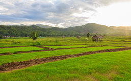 Beautiful green fields. Beautiful countryside green fields in Thailand Stock Photo